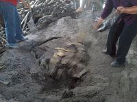 Proceso_de_preparación_de_la_barbacoa_en_México_01.jpg